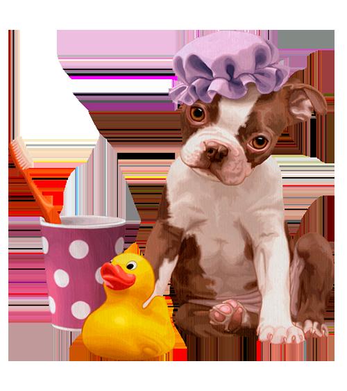 Prendre soin de son animal au quotidien