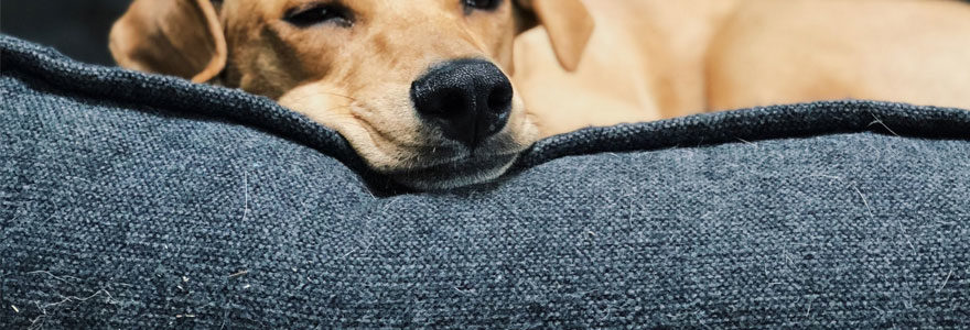 chien en train de dormir dans un panier